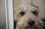 Dog Groomer Mallorca